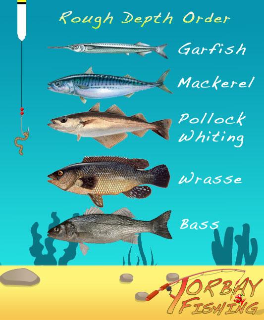 Mackerel fishing rigs for Pier fishing tips