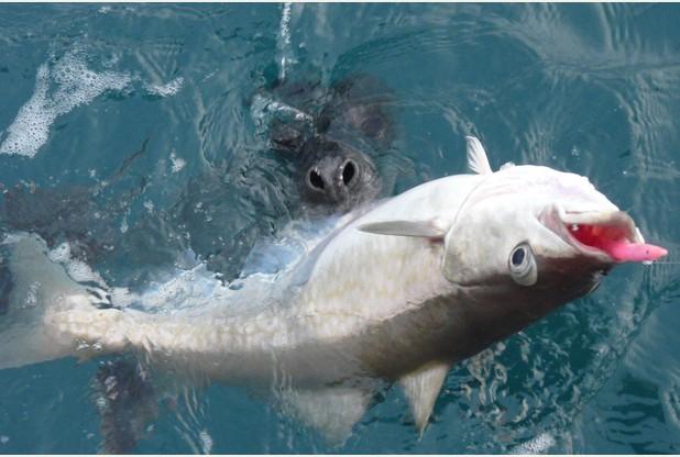 seal-large